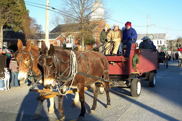 Christmas Parade in Chatham County