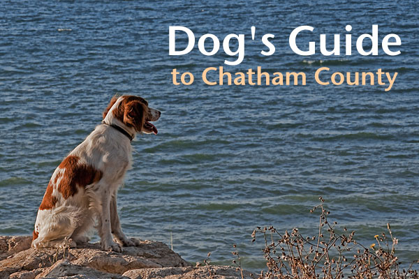 Dog Parks In Chatham County Nc