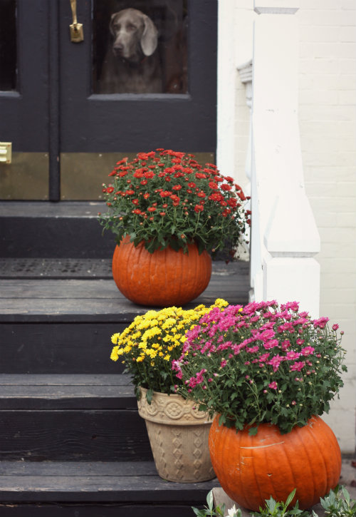 Tis The Season To Be Spooky Julie Roland Realty